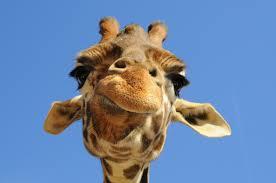 Le théorème de la Girafe